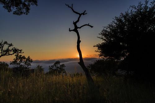 sunrise southafrica mpumalanga lydenburg kuduranch kuduprivatenaturereserve kudugameranch georgesview