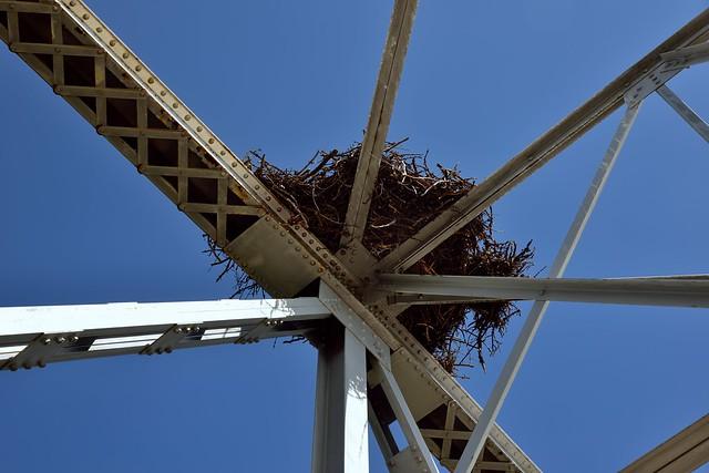 Osprey Nest Over a Bridge on the Banff-Windermere Parkway (Banff National Park)