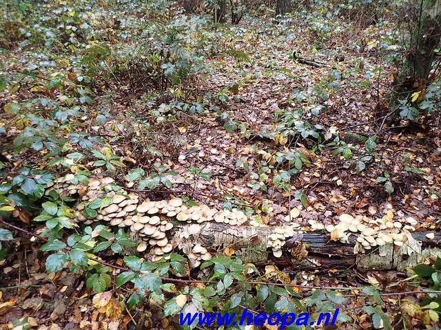 2016-11-09  Gooimeer tocht   25 KM   (51)