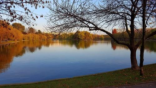 park pond lake seagulls autumncolors parcultitan reflections