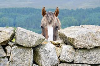 Pony Surveillance | by Philip McErlean