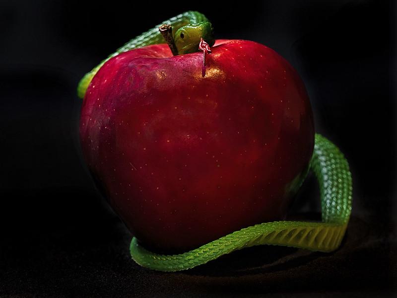 006_Forbidden Fruit