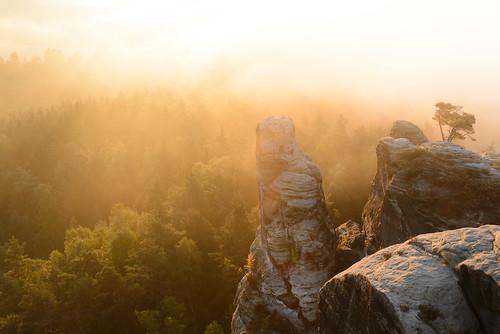 autumn trees mist mountains fall misty fog sunrise de deutschland nebel forrest herbst natur earlymorning berge sachsen landschaft wald goldenhour mountaintop goldenlight d600 earlybird 2485mmf3545g gamrig porschdorf
