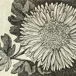 "Image from page 128 of ""Dreer's garden calendar : 1889"" (1889)"