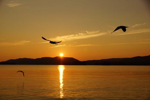 sunset birds birdsinflight