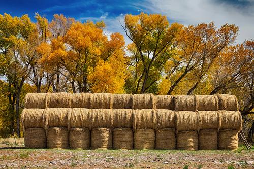 Autumn Hay Bales