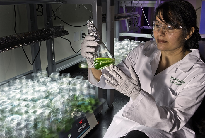 Growing a greener future with algal biofuels