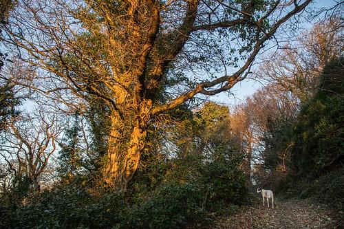 earlymorningsunshine earlymorninglight tree hastingscountrypark fairlightglen sqlpronouncedsequel textures ivy