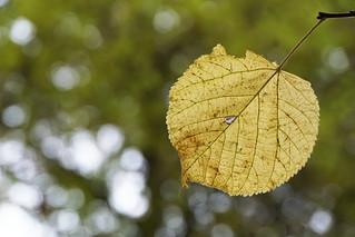 last leaf   by Rosmarie Voegtli