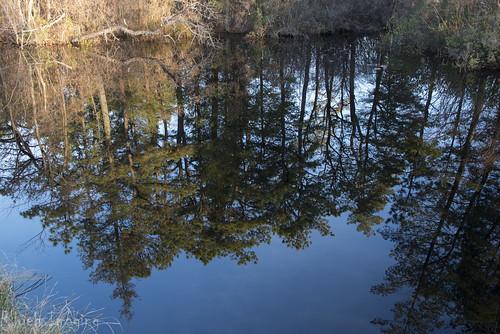 reflection landscape newjersey nikon nj d750 whitesbog