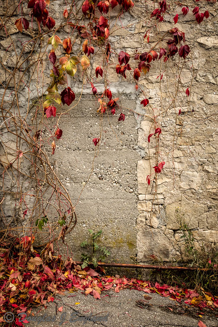 Fall Creeper on Wall