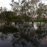 02 Viajefilos en Australia, Kakadu NP 111