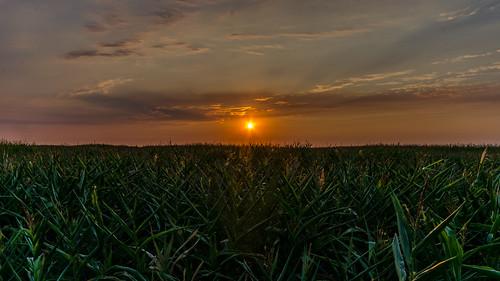 sunset sky landscape nikon bc britishcolumbia horizon sigma wideangle boundarybay dslr hdr highdynamicrange ladner d7000