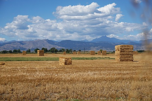 lafayette colorado field agriculture hay bale bales mountains rockymountain mountainview clouds sky farmland rural bouldercounty flatland harvest stack stacked cowfood concordians weather prairie lafayettecoloradolafayettecoloradolafayette colafayetteco lafayetteco lafayettecolorado usa delicious cielo