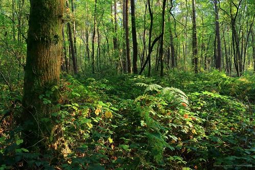 light summer green nature contrast forest canon lumière naturallight vert contraste été forêt lumièrenaturelle canoncamera canonlens