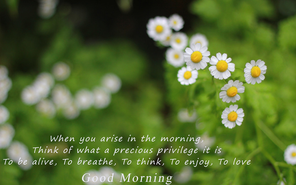 Good Morning Greeting Quote Wallpaper Famous Hd Wallpape Flickr