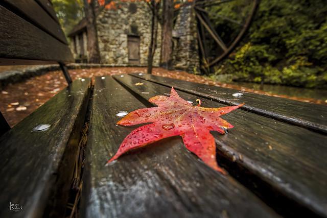 Old Mill Leaf 1