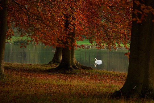 autumn trees sunset red england lake nature water birds forest landscape palace oxford blenheim oxfordshire blenheimpalace