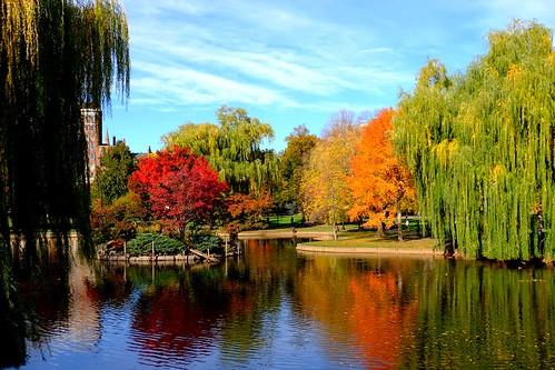 park autumn trees lake water boston reflections massachusetts autumncolours