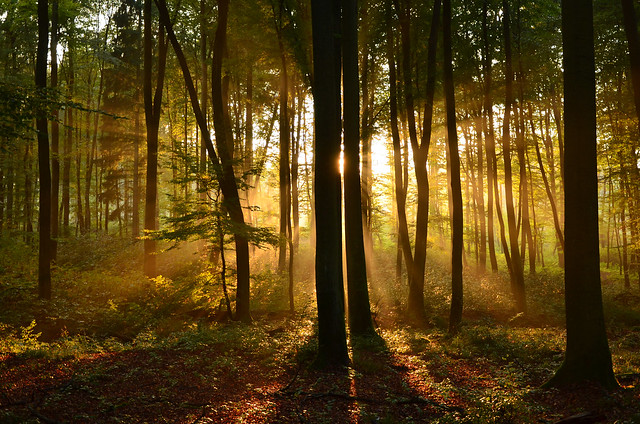 DSC_3962 Traumhafte Farben durch einen zauberhaften Sonnenuntergang im Märchenwald - Dreamlike colors through a magical sunset in the fairy tale forest