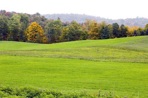 vermont vt grass landscape landscapes fall autumn green eden 草 césped otoño 秋季