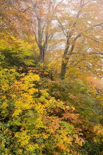 秋があり1 | by hiroching