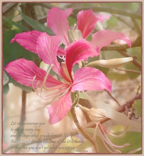 thankful poetography victoriaosteen textures texturen texture textur flowers flower blumen blüten bloom blossom blossoms blooms pink rosa pastel pastell outdoor photoborder flora fleur blume nature garden bunt farbig colorful colourful