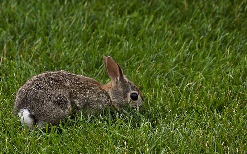 Baby Bunny   by ashleyhexum66