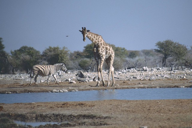 Namibia 2002