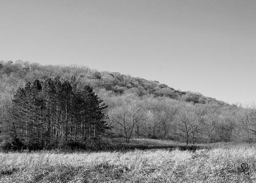 blackandwhite swissvalleynaturecenter swissvalley dubuquecounty peosta dubuque iowa grove landscape