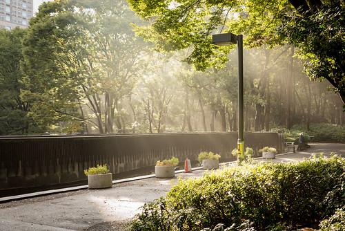 garden morning sunrise rayoflight shinjuku shinjukuchuopark japan tokyo shinjukuku tōkyōto jp