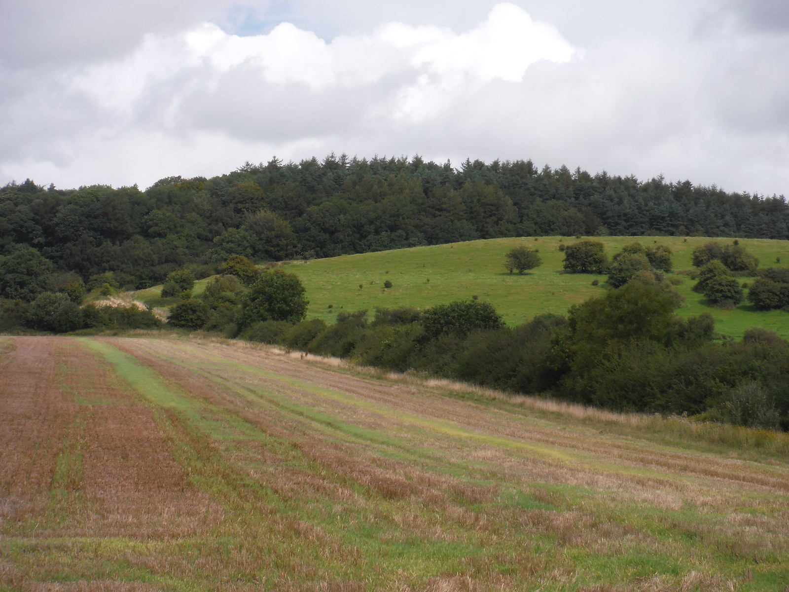 Knoyle Corner forested hilltop SWC Walk 248 Tisbury Circular via Hindon