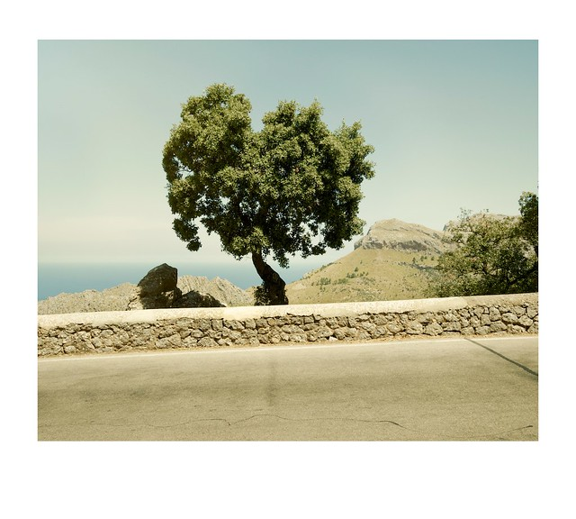Road, wall, tree and view.