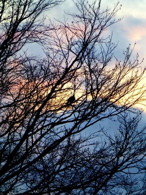 Sunset bird......