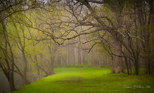 morningfog potawatomiwoods spring2015