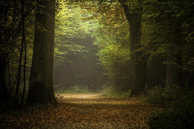 Elgin Coppice, Hatfield Forest