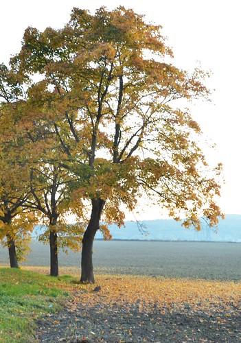 Fall | by K1_Camz