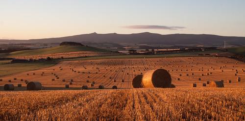 aberdeenshire bennachie colpy insch largie scotland alba bales garioch harvest straw sunrise culsalmond unitedkingdom