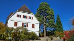 Wuerttemberg - Essingen -  castle & old seqouia tree