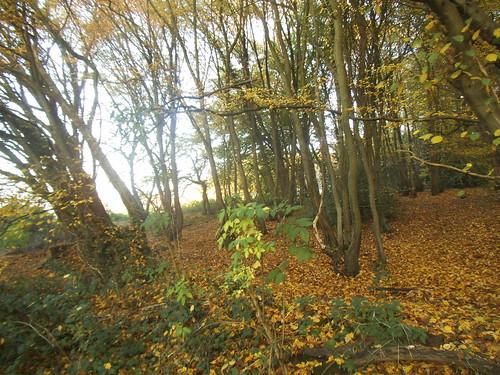 woods3   by satguru