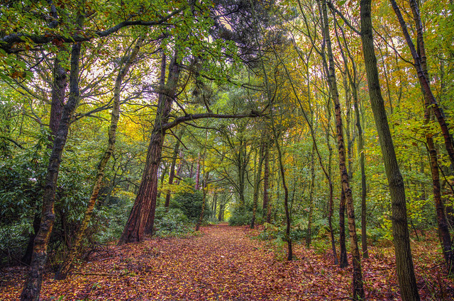 Autumn In Howell Wood
