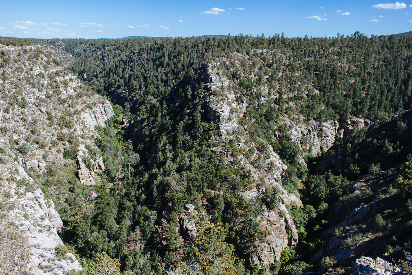 View of a canyon covered by trees