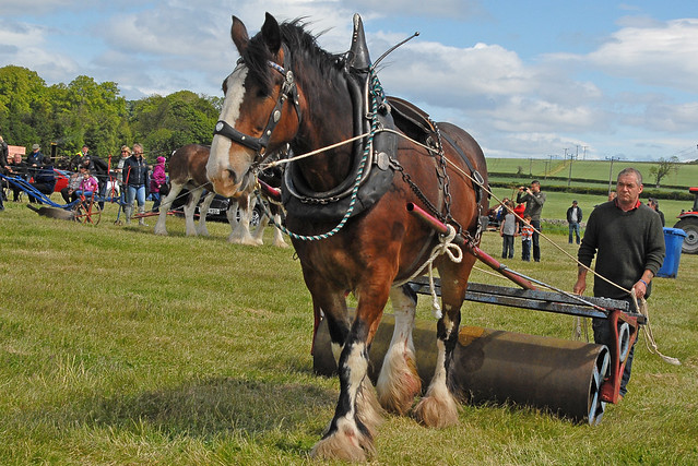 Working Horses 016 - FVAMC Rally 2015