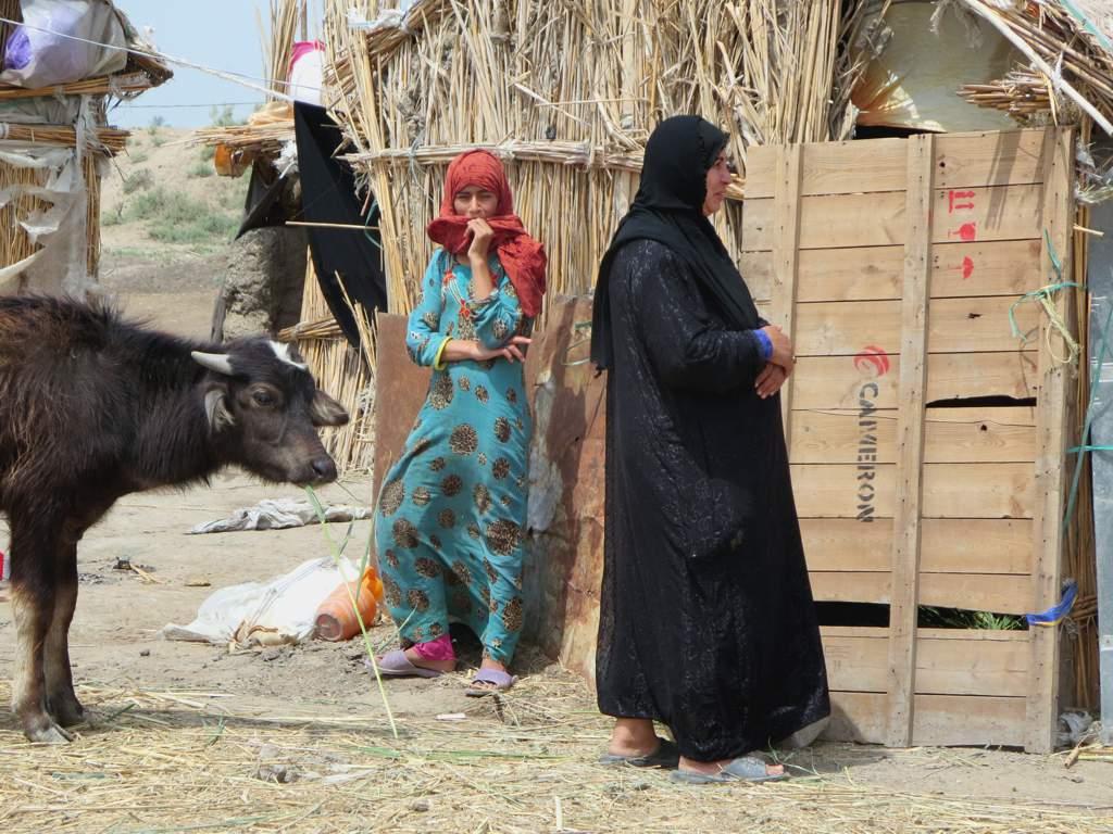 Marsh Arabs   The Marsh Arabs of Iraq keep water buffaloes f…   Flickr