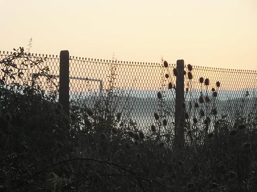 hedgerow fence mist goalpost goal portland dorset playingfield teasels bramble wet weather