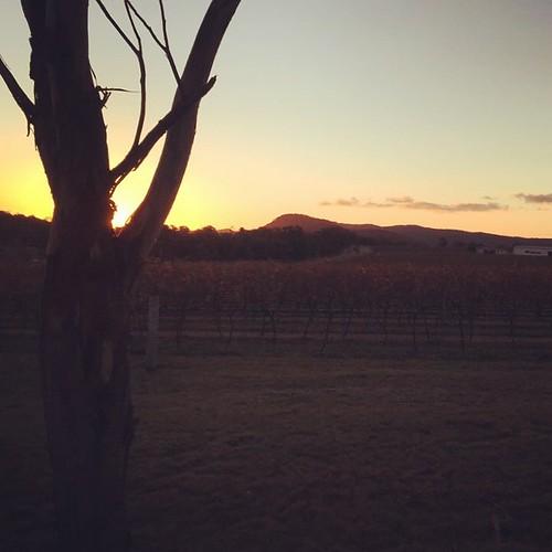 sunset square sundown squareformat rise wineyard stanthorpe iphoneography instagramapp uploaded:by=instagram