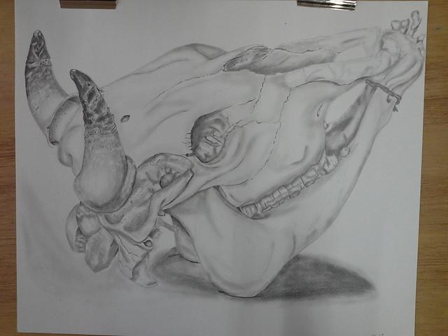 Still Life: Cow Skull