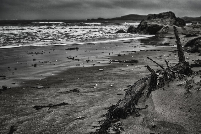 Log by the sea.