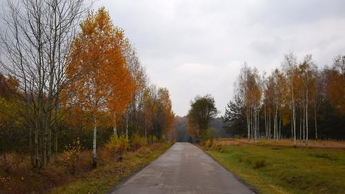 lodzhillslandscapepark landscape view nature autumn fall dark clouds cloudy weather yellow orange birch forest tree trees łódzkie lodzkie polska poland