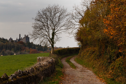 dunmore castle kildimo limerick countryside landscape lane laneway rural autumn tree ireland munster travel nature